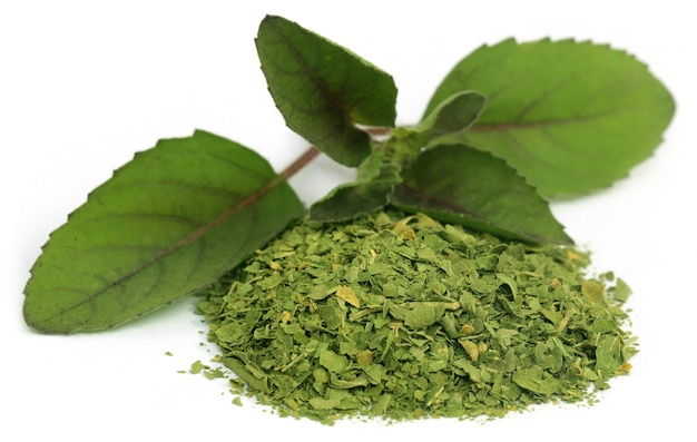 Manjericão holi medicinal ou folhas de tulsi sobre fundo branco