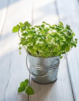 Manjericão micro-verde cultivado em uma jarra de metal em um fundo branco de madeira. o conceito de nutrição consciente, comida vegetariana
