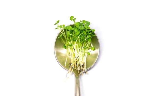 Manjericão microgreens isolado em um fundo branco. foco seletivo. comida.