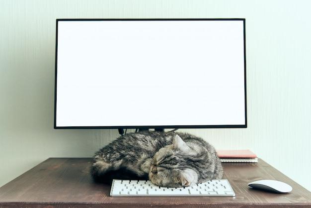 Mantenha a calma e fique em casa conceito. gato fofo dorme na área de trabalho ao lado do computador.