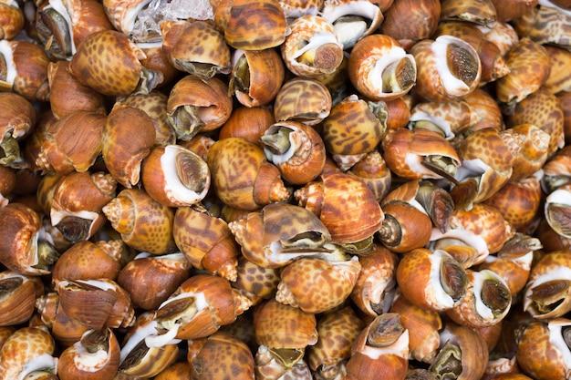 Mantenha a casca de conserva fresca no gelo para frutos do mar