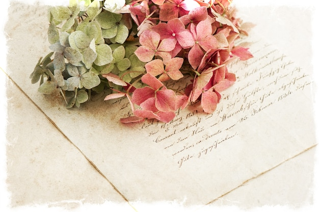 Manuscrito antigo e flores de hortênsia. fundo de estilo vintage romântico. foco seletivo