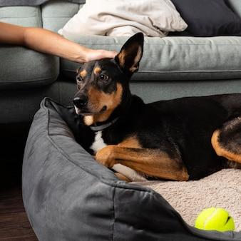 Mão acariciando cachorro fofo de perto
