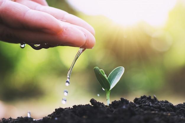 Mão, aguando, árvore, para, plantar, em, jardim