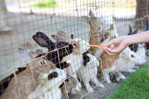 Mão alimentando o coelho com uma cenoura.