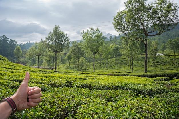 Mão aparecendo o polegar no fundo das plantações de chá. india, munnar, kerala.high mountain chá verde em montanhas de plano predam ao fundo. como cultivar chá no ceilão