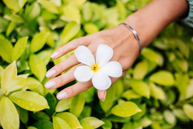 Mão bronzeada com manicure natural e pulseira de prata fofa com joias e flor de plumeria tailandesa branca