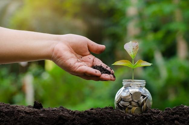 Mão colocar dinheiro garrafa árvore de notas de banco imagem de nota de banco com planta crescendo no topo para negócios fundo natural verde economia de dinheiro e conceito financeiro de investimento
