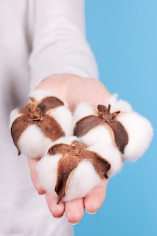 Mão com bola de flor de algodão isolada