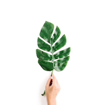 Mão com folha de palmeira tropical isolada