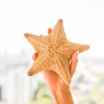 Mão, com, grande, starfish