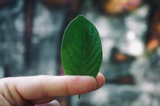Mão com uma folha verde texturizada na natureza no verão