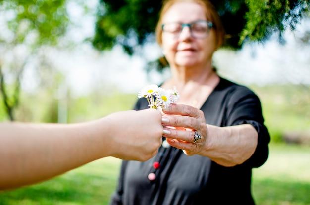Mão criança, dar, para, mulher sênior, margarida, flores, buquê., neto, dar, flores primavera, para, avó, ao ar livre., geração, ligação, família, e, alegria