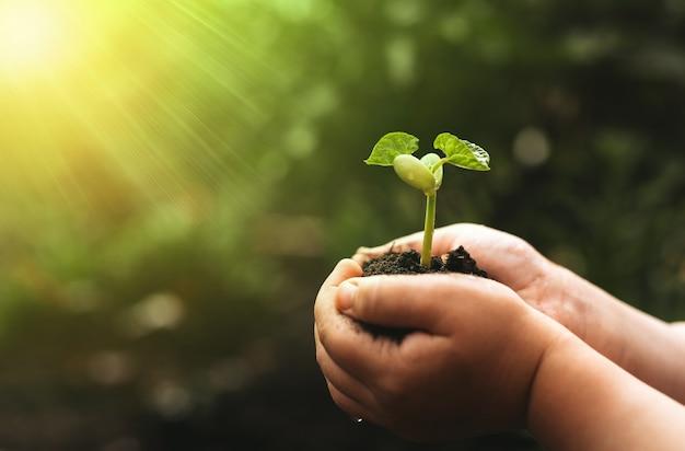 Mão da criança que guarda a planta de feijão no fundo da natureza do verde do borrão.