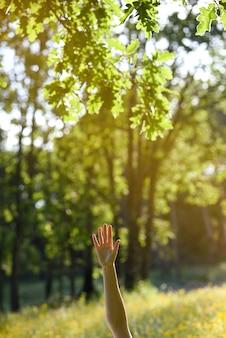Mão da mulher levantada na floresta