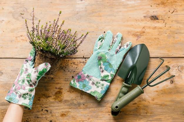 Mão da pessoa em luvas, plantando vaso de flores com ferramenta de jardinagem na mesa de madeira
