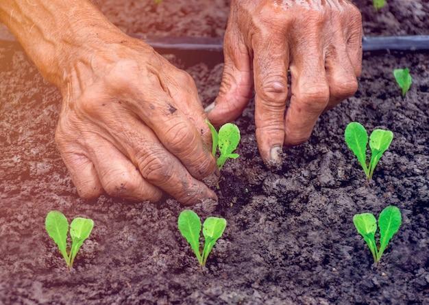 Mão da pessoa que segura terra de abundância com uma planta de muda em mão em um jardineiro