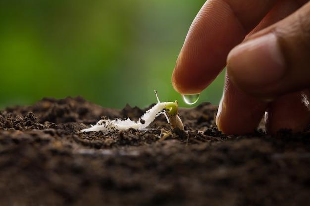 Mão dando água para mudas de vegetais crescer em solo preto