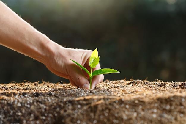 Mão de agricultor plantando brotos jovens em solo fértil.