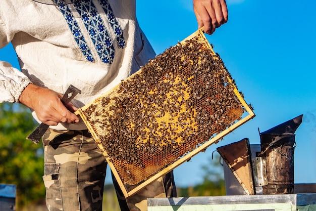 Mão de apicultor está trabalhando com abelhas e colmeias no apiário. abelhas em favos de mel. molduras de uma colmeia