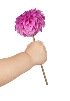 Mão de bebê segurando flor