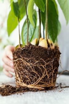 Mão de close-up com raízes no solo
