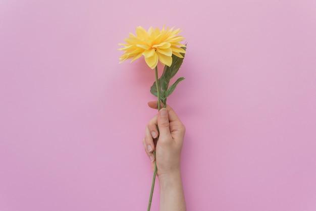 Mão de colheita segurando flor fofa