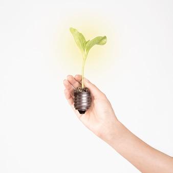 Mão de colheita segurando o germe da planta
