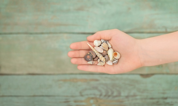 Mão de criança com conchas na superfície de madeira