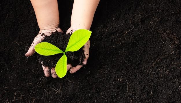 Mão de criança plantando mudas de árvore jovem em solo negro
