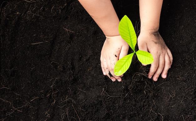 Mão de criança plantando mudas de árvore jovem em solo preto no jardim