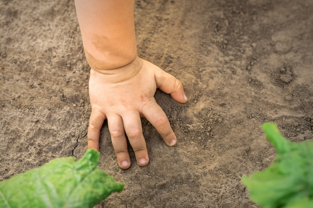 Mão de criança tocando fundo de solo seco