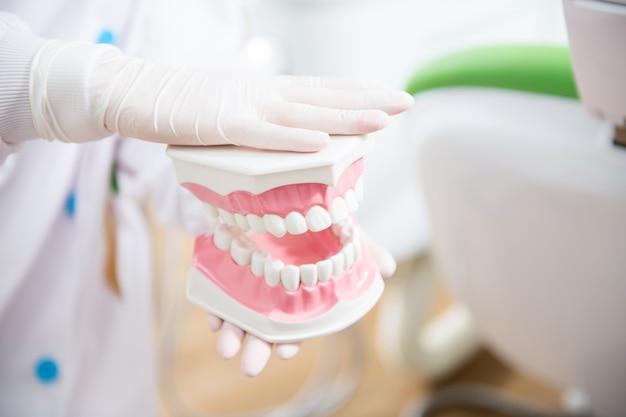 Mão de dentista segurando modelo de dentes.