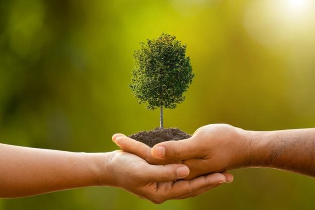 Mão de duas pessoas segurando a árvore no solo na luz solar ao ar livre e verde borrão plantando a árvore, salvar o mundo ou o conceito de crescimento e meio ambiente