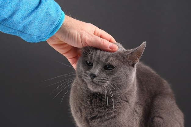 Mão de homem acariciando o gato cinza