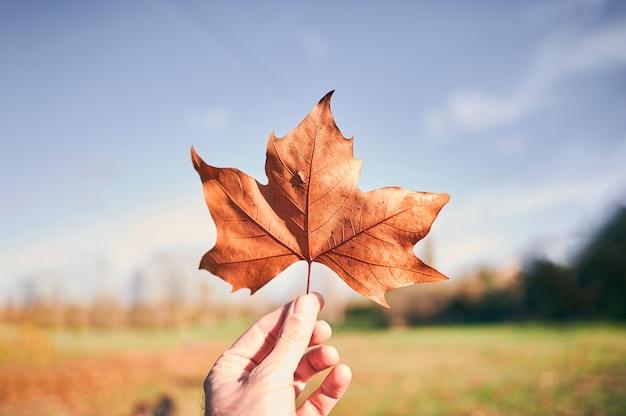 Mão de homem com uma folha de outono laranja em um fundo de campo turva