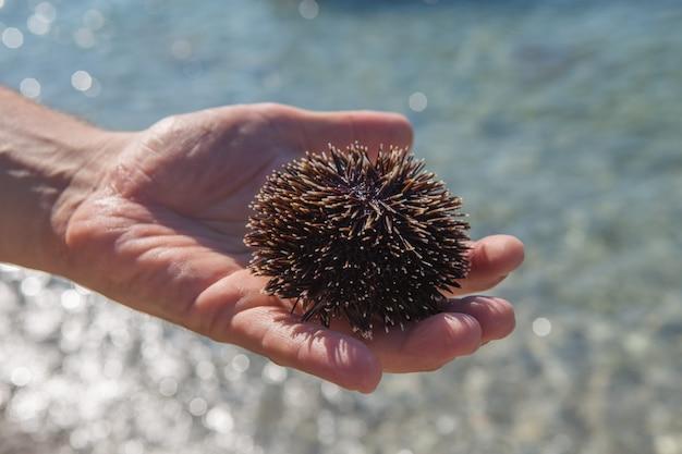 Mão de homem segurando um ouriço do mar negro na praia - mar