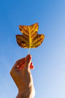 Mão de homem segurando uma linda folha laranja brilhante de outono no céu azul no conceito de outono