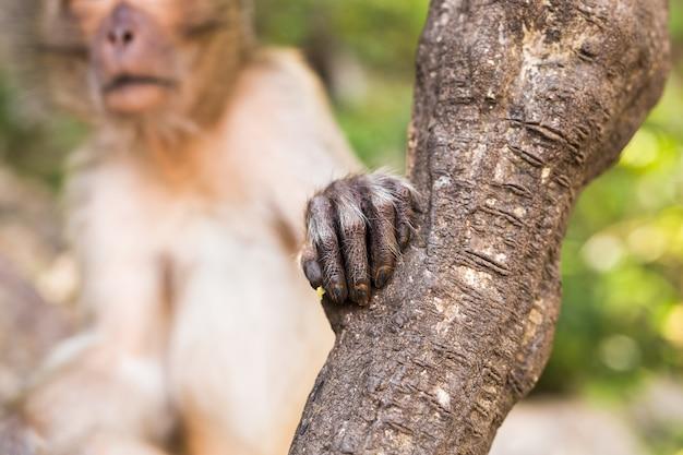 Mão de macaco
