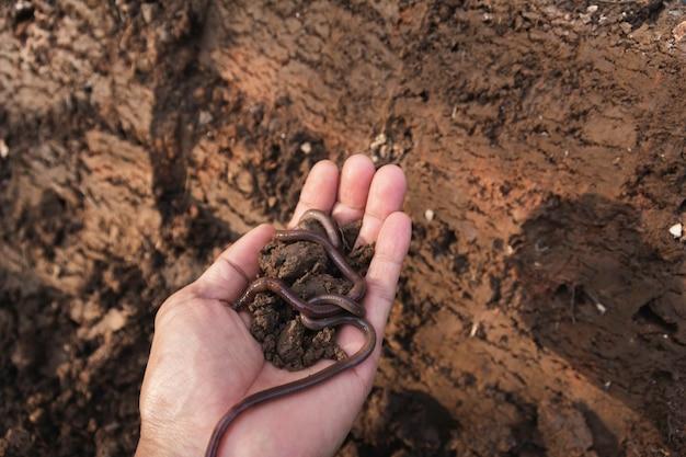 Mão de macho segurando o solo com minhoca nas mãos para o plantio com espaço de cópia para inserir texto.