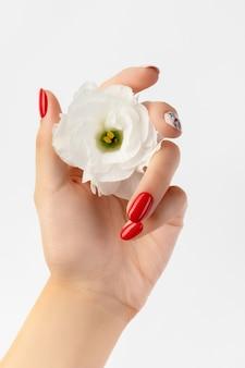 Mão de mulher bonita com manicure vermelha segurando uma flor em fundo branco