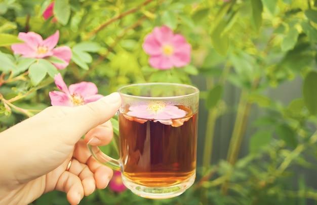 Mão de mulher colocar xícara de chá com flores de rosa mosqueta cão-rosa