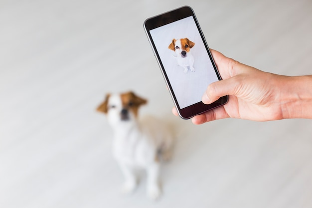 Mão de mulher com telefone móvel esperto, tirando uma foto de um cão pequeno bonito sobre branco