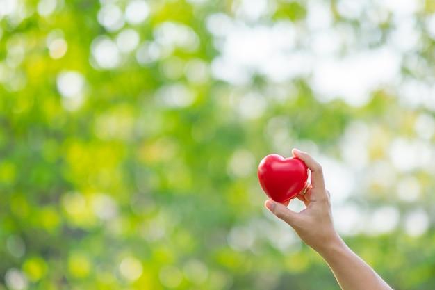 Mão de mulher segurando coração vermelho forma no fundo natural verde
