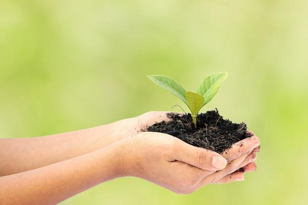 Mão de mulher segurando uma pequena planta de árvore verde