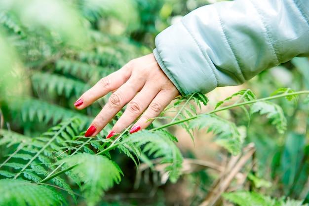 Mão de mulher viajante na folha verde