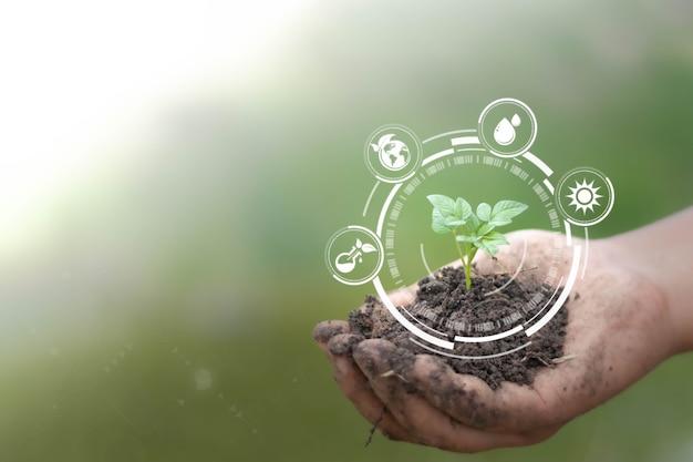 Mão de obra segurando planta com tecnologia futurista de ervas remédios naturais sustentáveis