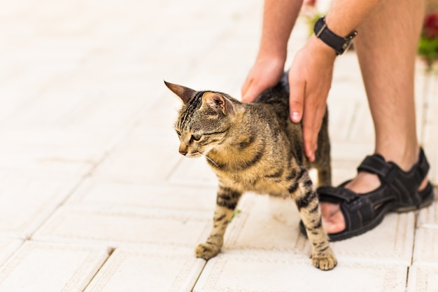 Mão de pessoa acariciando gato.