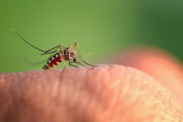 Mão de picada de mosquito
