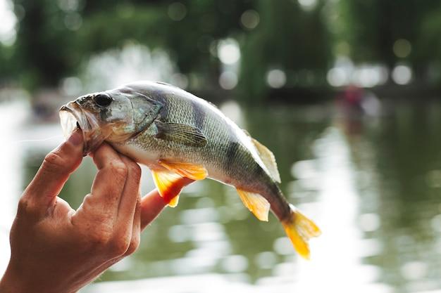 Mão, de, um, pessoa, segurando, peixe, frente, lago